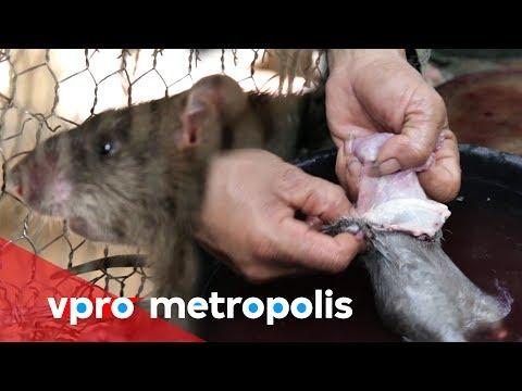 Eating rat meat in Cambodia - VPRO Metropolis