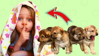 Играем в Прятки с Щенками, Алиса играет с щенками /Лисенок Алисенок