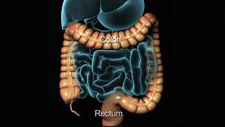Koloskopie | Unteren GI-Endoskopie | Kern Gesundheit