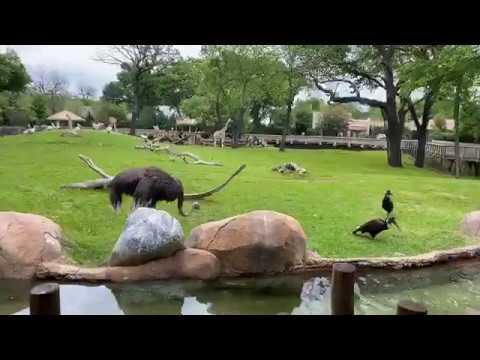 Fort Worth Zoo Keeper Chat - African Savanna Birds