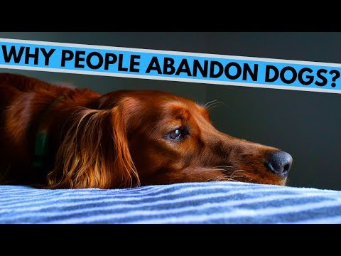 Dumb Reasons Why People Abandon Their Dogs