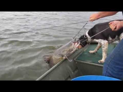 Record Louisiana Swamp Cat
