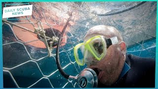 Daily Scuba News - Shark Diving Isn't An Offence!