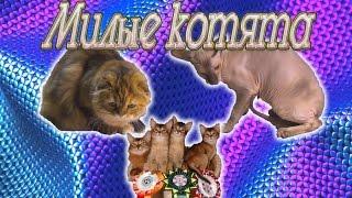 Выставка кошек. Часть 1 котята.