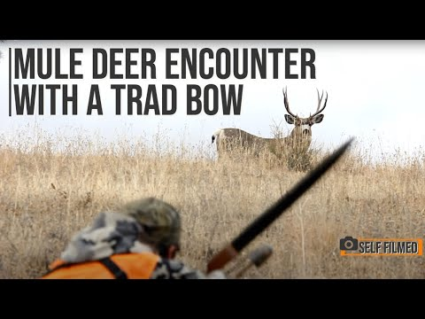 Bow Hunting Mule Deer With A Traditional Bow- Self Filmed