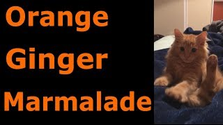 Orange, Ginger and Marmalade Cats --- CAT COMPILATION