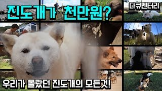 [다큐] 진도개 (진도개 종합보고서) 미처 몰랐던 진도개에 대한 모든이야기 by KBS목포
