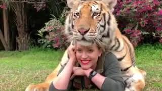 Pet Tiger Video On Tiktok