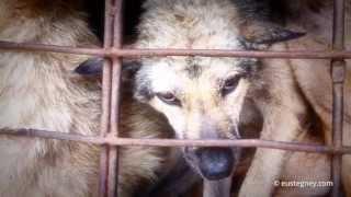 Грузовик кормовых собак во Вьетнаме(, 2013-07-04T10:32:58.000Z)
