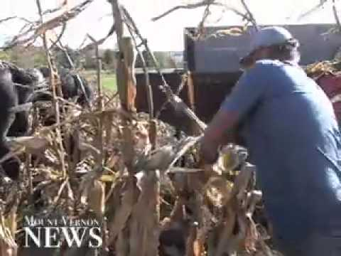 Old-fashioned way still the best for farmer