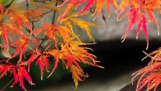 もののけ姫 -アシタカせっ記-(サクソフォン5重奏+ピアノ)|Legend Of Ashitaka Theme - Princess Mononoke - (5 Sax+Piano)