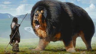 كيف كانت أشكال وأحجام الكلاب قبل 10.000 عام ؟!