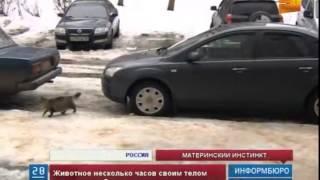 В Калужской области кошка спасла жизнь новорожденному ребенку
