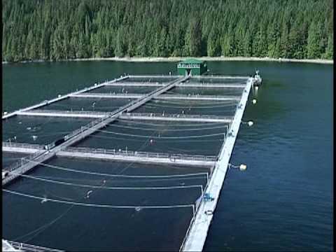 The Fastest Salmon Farm Tour...Ever!