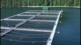 The Fastest Salmon Farm Tour...Ever!