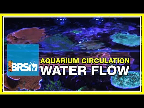 Week 9: Why flow is vital for a successful reef tank | 52 Weeks of Reefing #BRS160