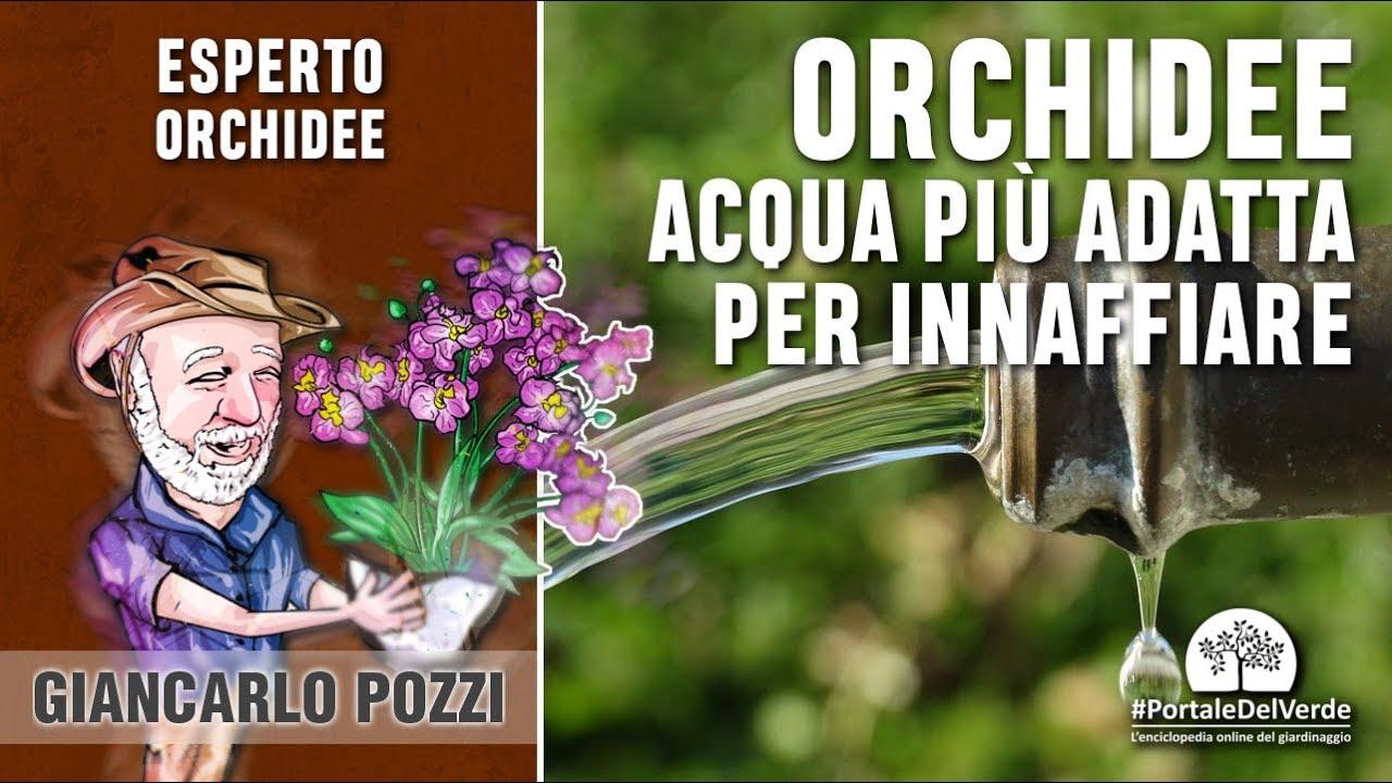 Quale acqua si utilizza per bagnare le orchidee? - YouTube