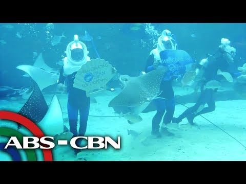 Biggest Oceanarium sa Cebu | Rated K