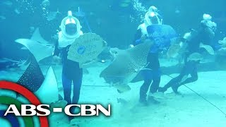 biggest-oceanarium-sa-cebu-rated-k