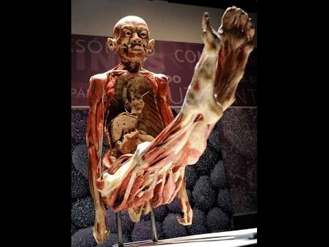 impresionante,documental-👅👍-el-cuerpo-humano,national-geographic,discovery,documentales,docu,2017