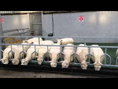 Cormac Sheep Equipment Sheep Barrier