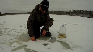 Щука на жерлицы  перволёдок второй день рыбалки.