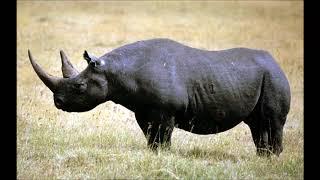 ТОП 10 Вымершие животные по вине человека