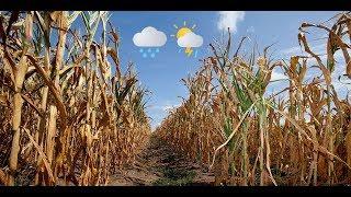 Sommerprognose 2019 von Kai Zorn: Mehr Abwechslung und weniger Trockenheit
