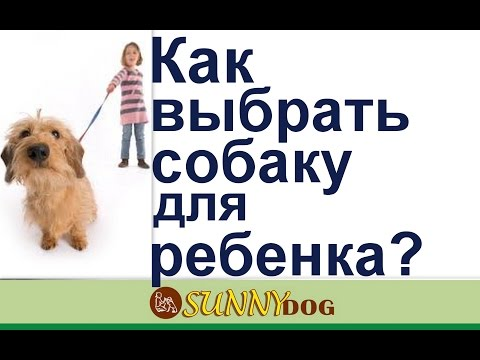 Вопрос: Какой породы щенка взять в квартиру для малолетнего ребенка?
