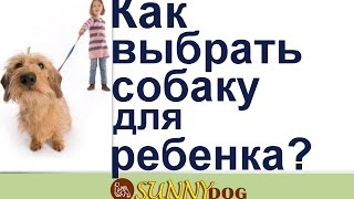 Выбор собаки для ребенка! Как выбрать собаку для ребенка.
