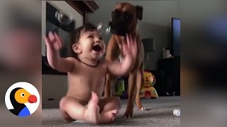 Dog, Baby Playing with Bubbles Will Make Your Day | The Dodo