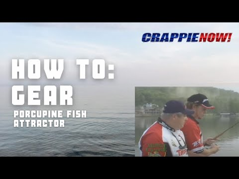 Porcupine fish attractor doovi for Porcupine fish attractor