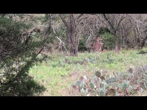 Public Land Bow Hunt Texas Episode 1 2018