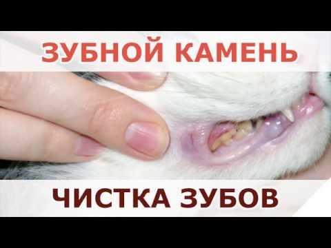 Как убрать зубной камень у кота
