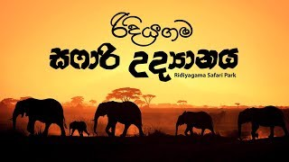 ridiyagma-safari-park