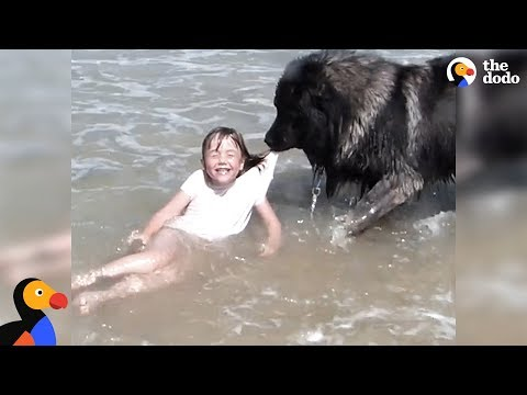 download Dog 'Saves' His Little Girl From The Ocean | The Dodo