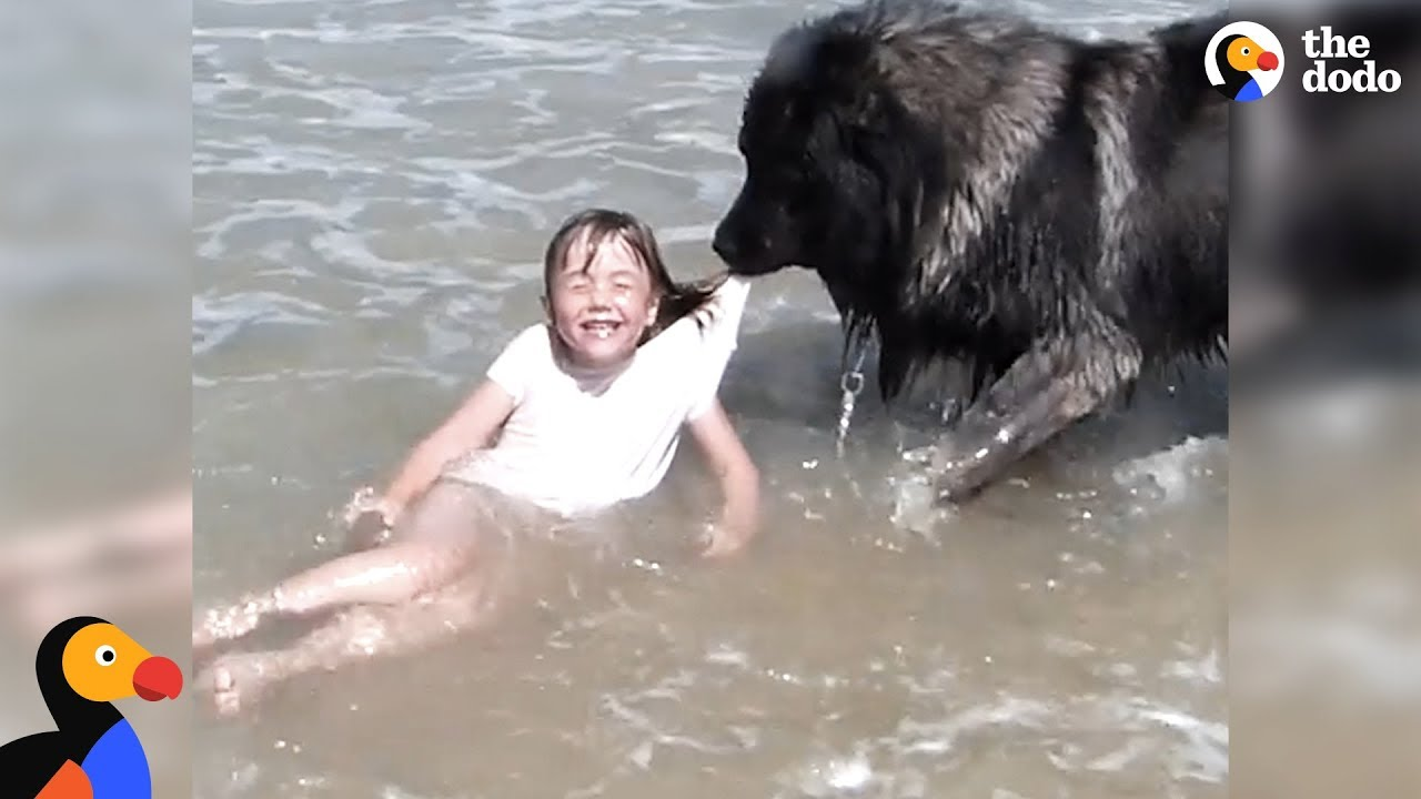 Dog Saves His Little Girl From The Ocean  The Dodo -8099