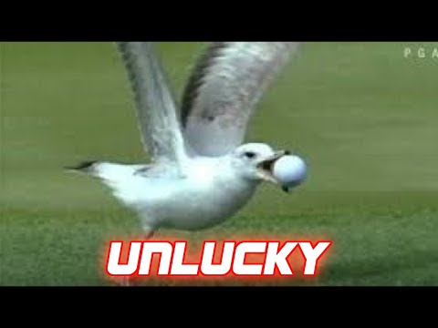 Unluckiest Moments in Sports History
