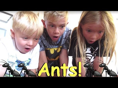 Ants INVADE our House and William visits the Doctor!