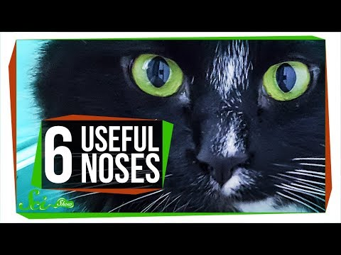 6 Animal Noses That Outsniff Dogs