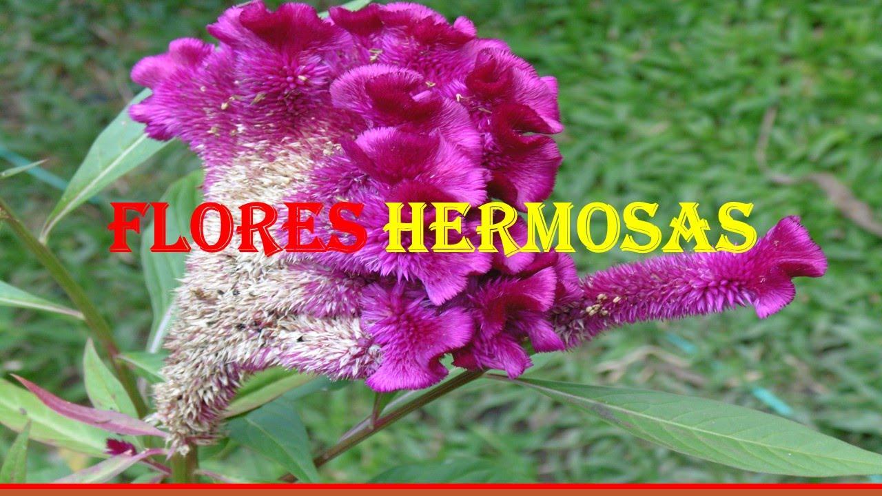 Flores tipos de flores fotos de flores flores - Tipos de plantas ...