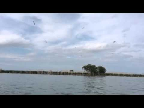 Seagulls - a LOT of Chatter - on Lake St. Clair