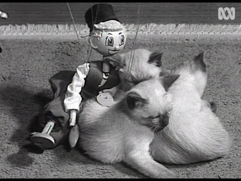 1961 film of Siamese kittens playing … and a random puppet | RetroFocus