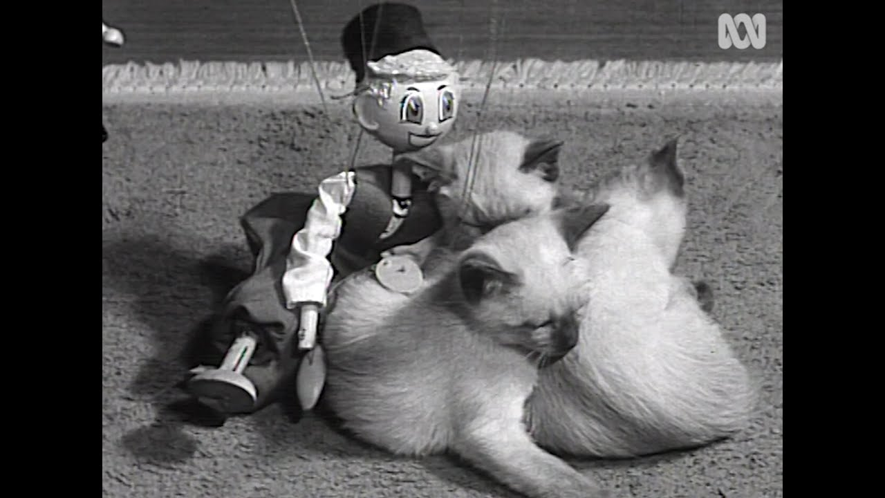 1961 film of Siamese kittens playing … and a random puppet   RetroFocus