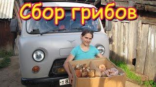 Семья Бровченко. Поездка за грибами - волнушки и подберезовики. (08.16г.)