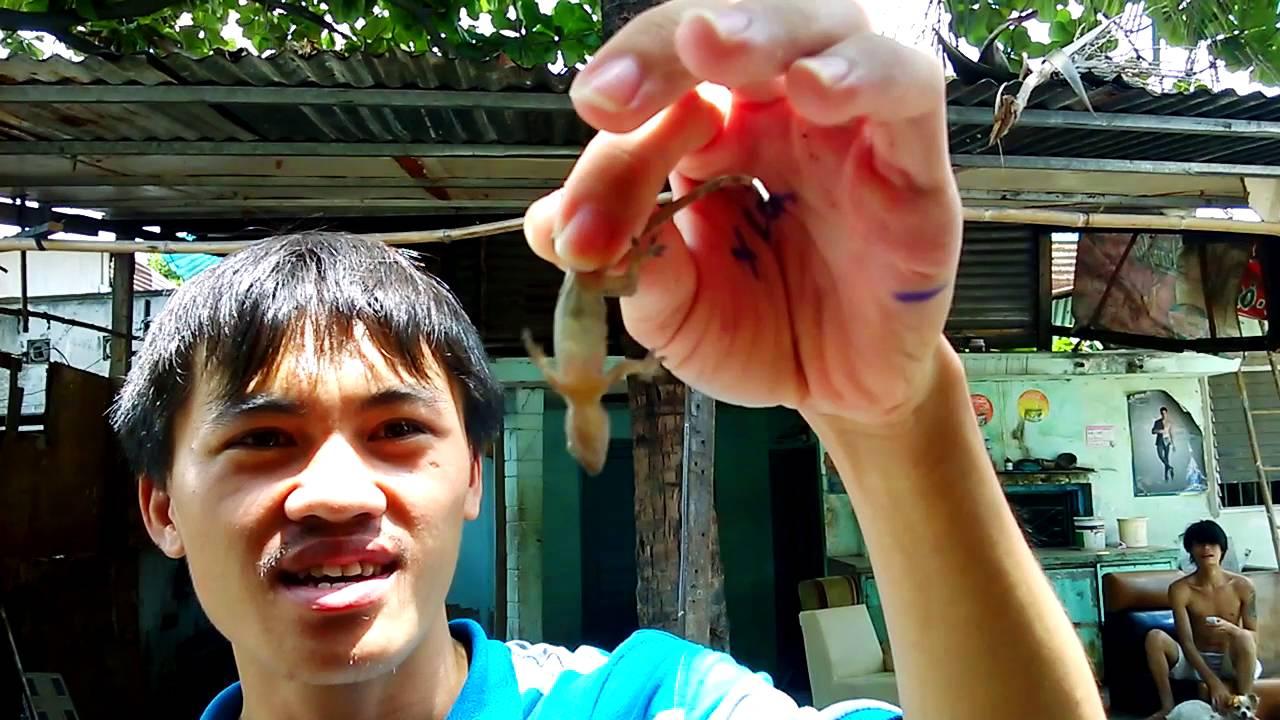 Thức ăn cho tắc kè (4 món)   Gecko's foods