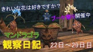 【DDON】マンドラゴラ観察日記+新種登場きれいなお花は好きですか【ガーデニング】22日~29日目