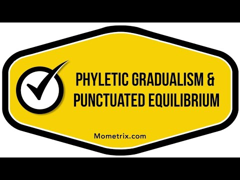 explain the concepts of phyletic gradualism and punctuated equilibrium