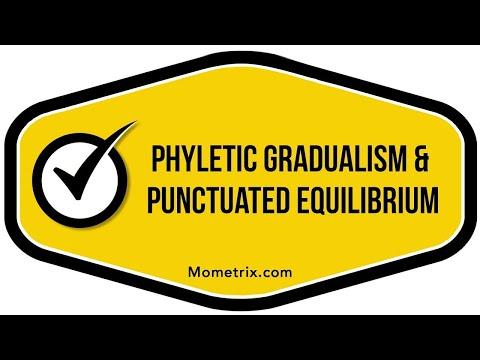 Phyletic Gradualism and Punctuated Equillibrium