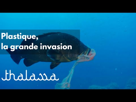 Plastique, la grande invasion (reportage complet)